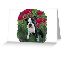 baby Affinia Greeting Card