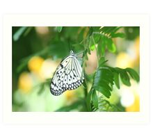 Beautiful Butterfly in a Garden  Art Print