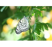 Beautiful Butterfly in a Garden  Photographic Print