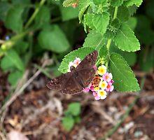 Butterfly on Lantana Bush by Penny Odom