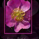 Happy Birthday - Pink Flower on Black Background by Joy Watson