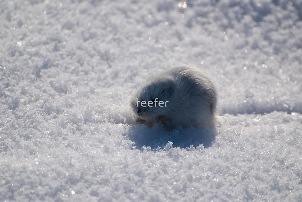 Little Lemming by reefer