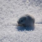 Little Lemming by reefer