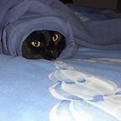 Bella our cat does not care who she borrows clothes from:) by Alex Gardiner
