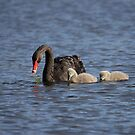 Black Swan ... motherhood by mosaicavenues