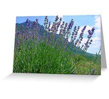 The big season of a lavender 3 .Mountain lavender ... Greeting Card
