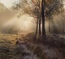 Misty Morning by Kathy Wright
