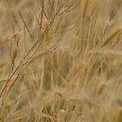 Windblown Cattails by down23