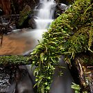 Wonwondah Falls by Travis Easton