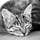 Kiara The Kitty by Robert Drobek