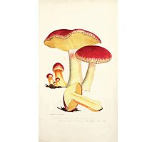 Coloured figures of English fungi or mushrooms James Sowerby 1809 0121 Photographic Print
