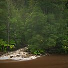 Flood in the Forest by NickMonk