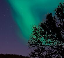 Northern lights in Tromso, Norway by Tisato