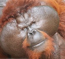 Aman the orang utan #1 by Denzil