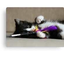 Fun with feathers Canvas Print