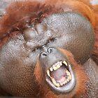 Aman the orang utan #2 by Denzil