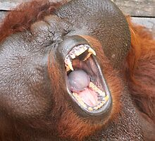 Aman the orang utan #3 by Denzil