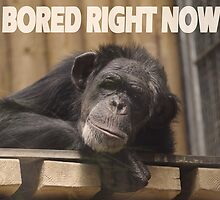 SO BORED RIGHT NOW by Matthew Scotland
