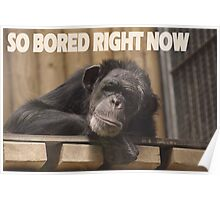 SO BORED RIGHT NOW Poster
