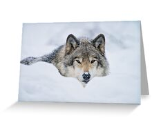Timber Wolf In Snow Greeting Card
