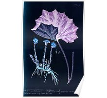 A curious herbal Elisabeth Blackwell John Norse Samuel Harding 1737 0522 Colts Foot or Poles Foot Inverted Poster