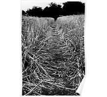 Location -Fields. Poster
