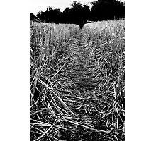 Location -Fields. Photographic Print