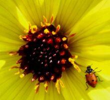 Yellow Dahlia Flower with Ladybug  Sticker