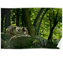 Lazy Summer Days - Timber Wolf Poster