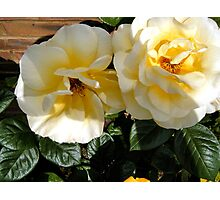 Twin Roses Photographic Print
