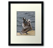 Pelican love Framed Print