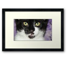 Scampurr's face Framed Print