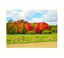 Fall Colours Art Print