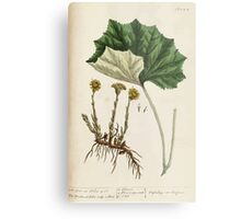 A curious herbal Elisabeth Blackwell John Norse Samuel Harding 1737 0522 Colts Foot or Poles Foot Metal Print