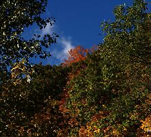Blue Sky clouds and Fall by srosu