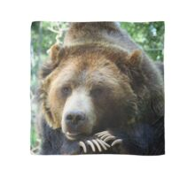 Grizzly Bear in the Colorado Rockies summer shade Scarf