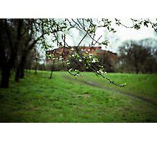 Wild plum blossom Photographic Print