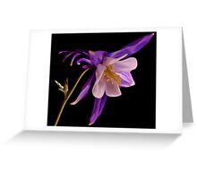 PURPLE AQUILEGIA...(Columbine flower) Greeting Card