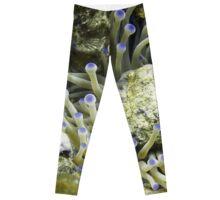 Purple Tipped Giant White Sea Anemone Leggings