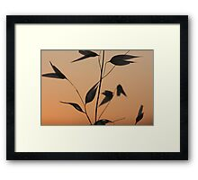 Wild flora XIII 9901 Framed Print