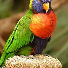 Rainbow Lorikeet  by angeljootje
