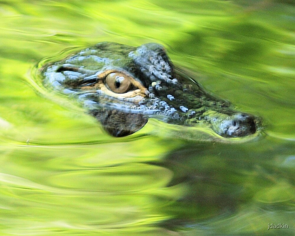 eye of a gator by jdadkin