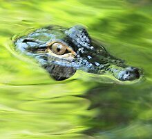 eye of a gator by jdadkin