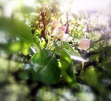 apple blossoms #5 by Dawna Morton