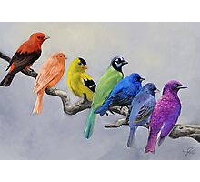 Birds of all Colors Photographic Print