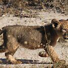 Lion cub by jozi1
