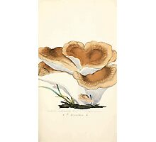 Coloured figures of English fungi or mushrooms James Sowerby 1809 0231 Photographic Print