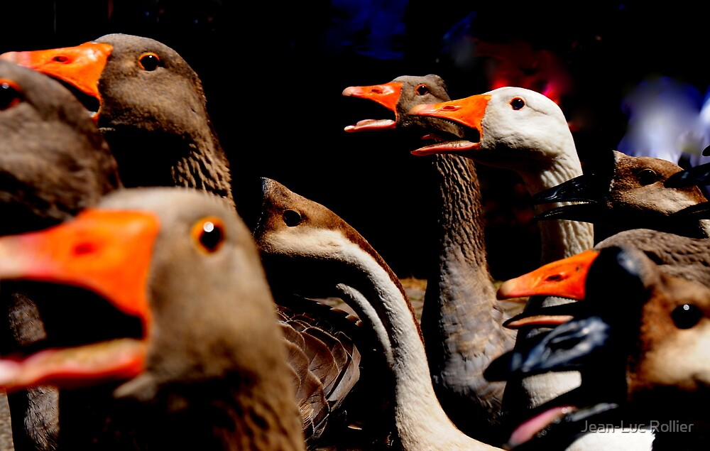Gang of gooses. by Jean-Luc Rollier