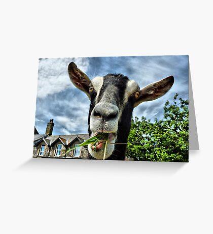 Nosy Goat .  Greeting Card