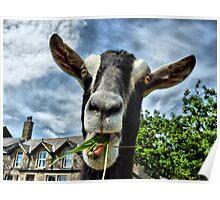 Nosy Goat .  Poster